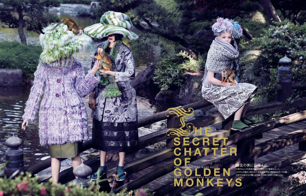The Secret Chatter of Gold Monkeys (Daphne Groeneveld za